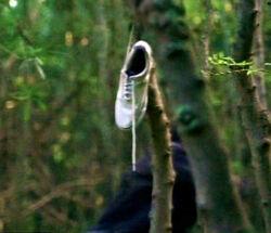 Lost - whiteshoe