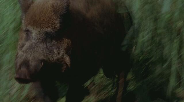 File:1x17-Boar.jpg