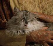 Amiras Cat.jpg