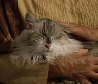 Amiras Cat