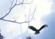 File:Hurley Bird 1st time.jpg