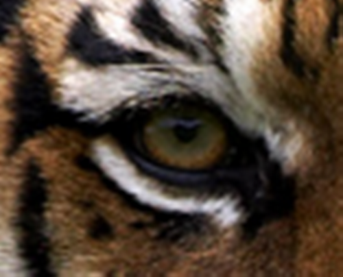 File:Eye of the tiger.png
