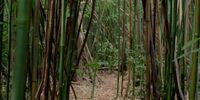 Bosque de bambúes