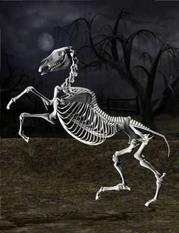 File:DAZ Productions - Skeleton Horse