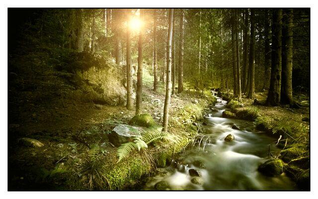 File:Mirkwood Forest2.jpg