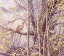 Старый лес