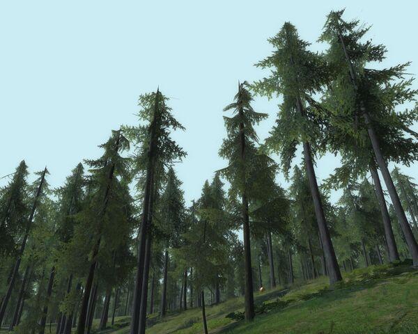 File:Bindbole wood.jpg