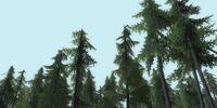 Bindbole wood