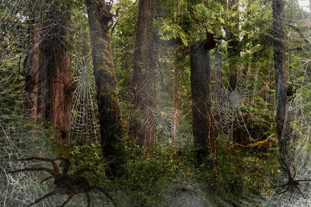 File:Forest1.jpg