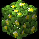 LeavesLemon