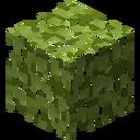 LeavesAspen
