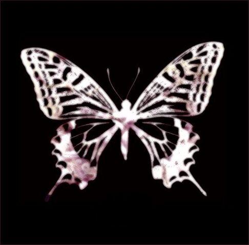 File:Loveless Butterfly.jpg