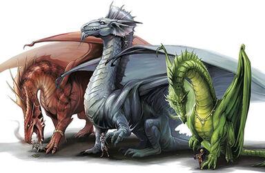 Dragons - Eva Widermann
