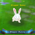 Slipper bunny.png