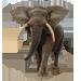 Item africanelephant 01