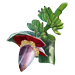 Standard 75x75 collect amazonian plants bananaplant 01