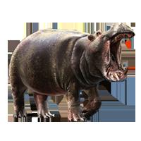 Huge item hippopotamus 01