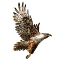 Huge item galapagoshawk 01