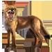 Item coyote 01