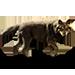 Item italianwolf 01