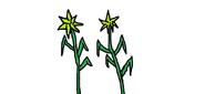 Sticker plants