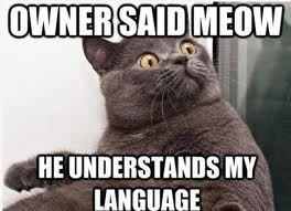 File:Owner said meow.jpg