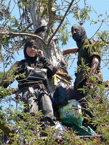 File:Berkeley Tree Sitters - UC Berkeley Memorial Oak Grove.jpg