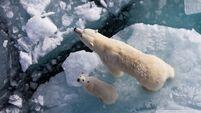 Polar bear and global warming-wallpaper-960x540