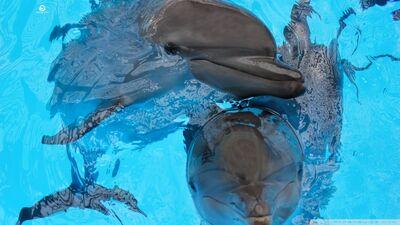 Dolphin 4-wallpaper-960x540