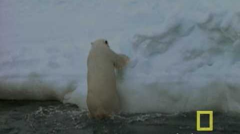 Exploring Oceans Arctic