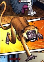 Monkey (Earth-20051) Marvel Adventures Hulk Vol 1 1
