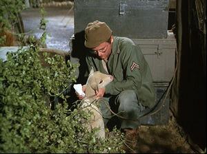 Mash-season-3-14-private-charles-lamb-radar