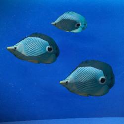 File:Creatures Fish.png