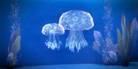 Belan Jellyfish