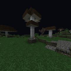 Various Huge Brown Mushrooms