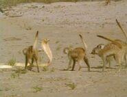 Meerkats United - Mobbing