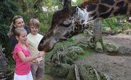 MZ-Closeup-Giraffe-Family