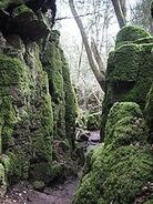 170px-Puzzlewood (Andy Dingley)