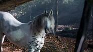 1.11 Unicorn