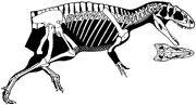 Yangchuanosaurus dongi