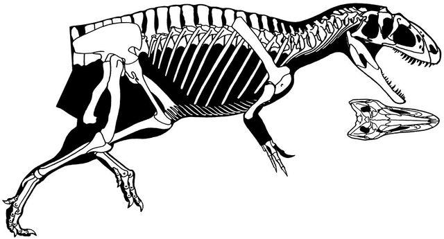 File:Yangchuanosaurus dongi.jpg