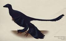 072 microraptor zhaoianus by green mamba-d5fajtu