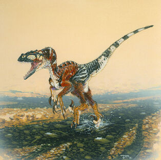 Utahraptor-Todd-Marshall