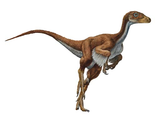 File:Dromaeosaurus-Raul-Martin.jpg