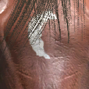 File:Dhorse head3.png