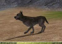 Wild Dog 1