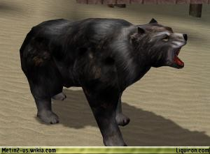 File:Black Bear 1.jpg