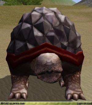 File:Desert Tortoise 3.jpg