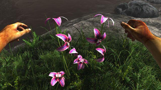 File:Rainbow orchid.jpg