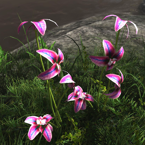 File:Rainbow orchid.png